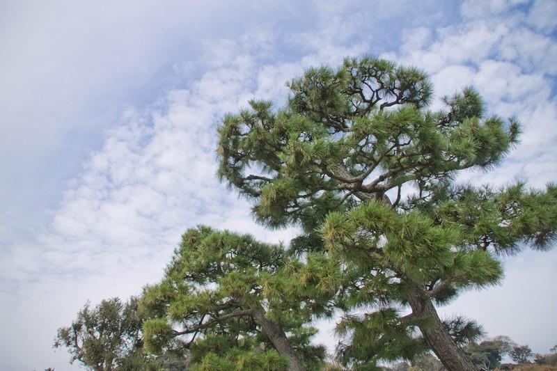 三保の松原をスペイン語で説明する